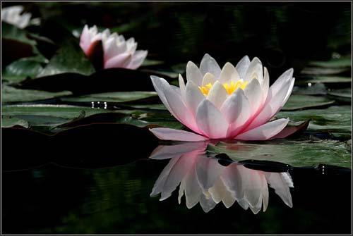 Mandalas Flor De Loto Significados De Los Colores Mandalas